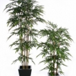 Bamboo Tree Artificial with Natural Trunk 7