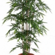 Bamboo Tree Artificial with Natural Trunk 10