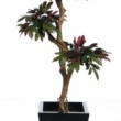 Capensia Tree Artificial with Natural Trunk 16