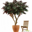 Capensia Canopy Tree Artificial with Natural Trunk 18