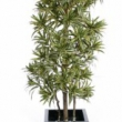 Dracena Relexa Tree Artificial with Natural Trunk 20