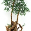 Large Bonsia Tree Artificial with Natural Trunk 22