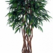 Longifolia Tree Artificial with Natural Trunk 24