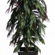 Ficus Longifolia Tree Artificial with Natural Trunk 25