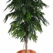 Ficus Longifolia Canopy Tree Artificial with Natural Trunk 26