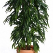 Ficus Longifolia Tree Artificial with Natural Trunk 28