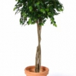 Ficus Natasja Tree Artificial with Natural Trunk 29