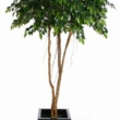 Ficus Natasja Umbrella Artificial with Natural Trunk 30