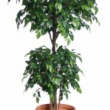 Ficus Natasja Double Ball Tree Artificial with Natural Trunk 31