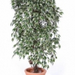 Ficus Variegated Tree Artificial with Natural Trunk 32