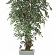 Ficus Liana Tree Artificial with Natural Trunk 33