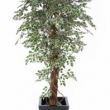 Ficus Variegated Tree Artificial with Natural Trunk 34