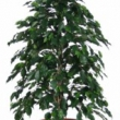 Ficus Exotica Tree Artificial with Natural Trunk 36