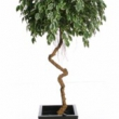 Ficus Exotica Artificial with Natural Trunk 39