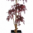 Jananese Maple Bonsia Tree Artificial with Natural Trunk 45