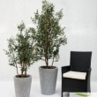 Olive Tree Artificial with Natural Trunk and olives 47