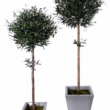 Olive Tree Balls Artificial with Natural Trunk and olives 48
