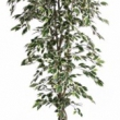Ficus Variegated Tree Artificial with Natural Trunk 37