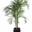 Areca Palm 7ft Tree Artificial