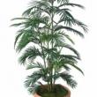 Areca  Palm Tree Artificial
