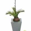 Cycas Palm  Artificial