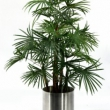 Replica Lady Palm Tree Artificial