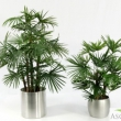 Lady Palm and  Baby Fan Palm  Tree Artificial