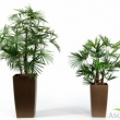 Lady Palm  3ft  1FT Baby Fan Palm  Tree Artificial