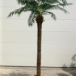 Replica Robellini Palm Tree Artificial