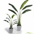 Replica Traveller Palm Tree Artificial