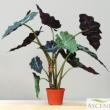 Replica ALOCASIA plant