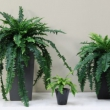 Artificial Ferns Boston