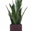 Artificial Sanseveria Plant