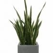 Replica Sanseveria Plant