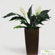 Artificial Spathiphllum Plant