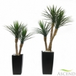 Artificial Yucca and  Yucca Rostrata