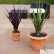 Replica Pandanus Plants