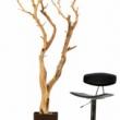 Manzanita Wood Large