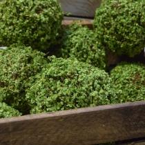 Moss Balls (1)