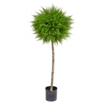 External Topiary Cedar Ball Single Light Green Tree   120cm  ASCTL1329 (1)