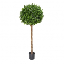 External Topiaryy New Buxus Ball Tree 120cm or 150cm ASCBOX1_4 (1) (1)