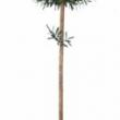 Olive Tree Single Ball Replica