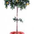 Artificial Fruit Tree Orange