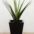 Replica Pandanus Plant Green