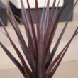 Artificial Pandanus Plant Red