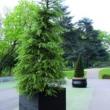 External Planter 43