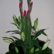Arrangement with lillies