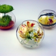Small table bowl displays