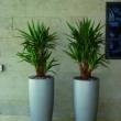 Budget Planter 9