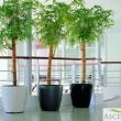 Budget Planter 18
